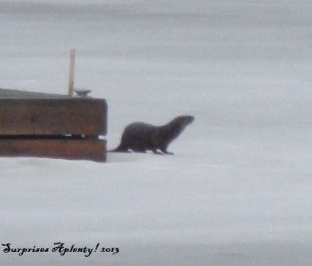 April 10 Otter And Muskrat (8) b